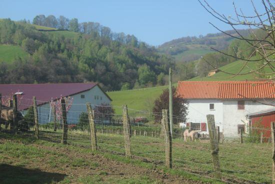 BasqueFarm