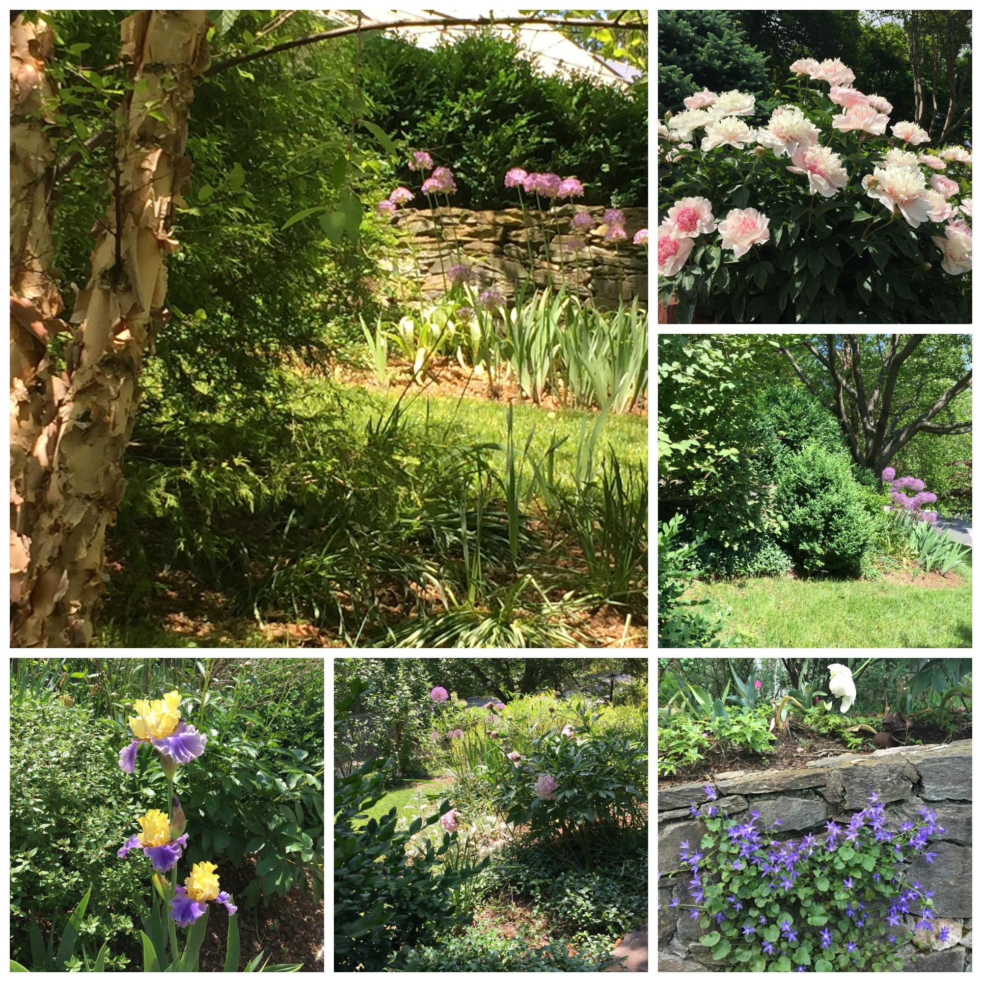 gardenlatespring (1)